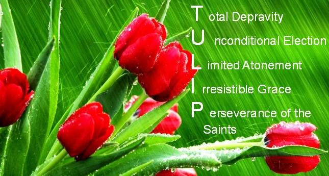 tulips_background1